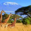 Zonnig Afrika